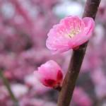 大河ドラマ「江~姫たちの戦国」の批判
