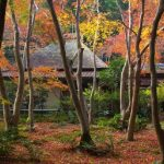 平清盛ゆかりのツアー 京都